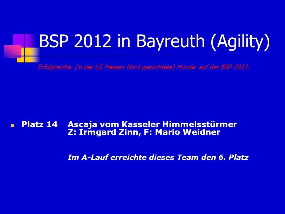 BSP 2012 in Bayreuth (Agility)