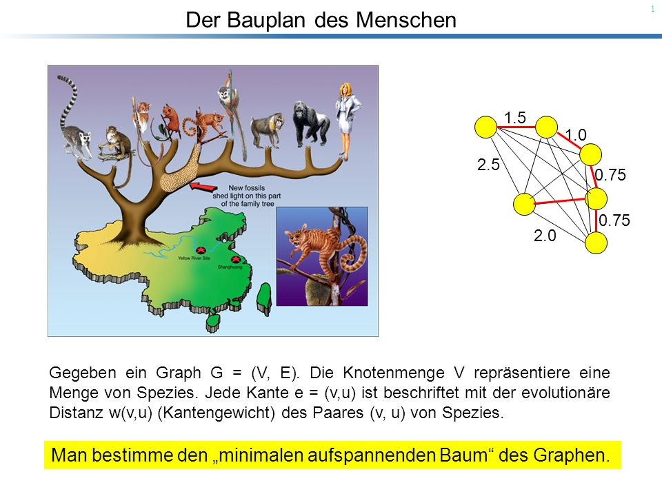 """Man bestimme den """"minimalen aufspannenden Baum des Graphen."""