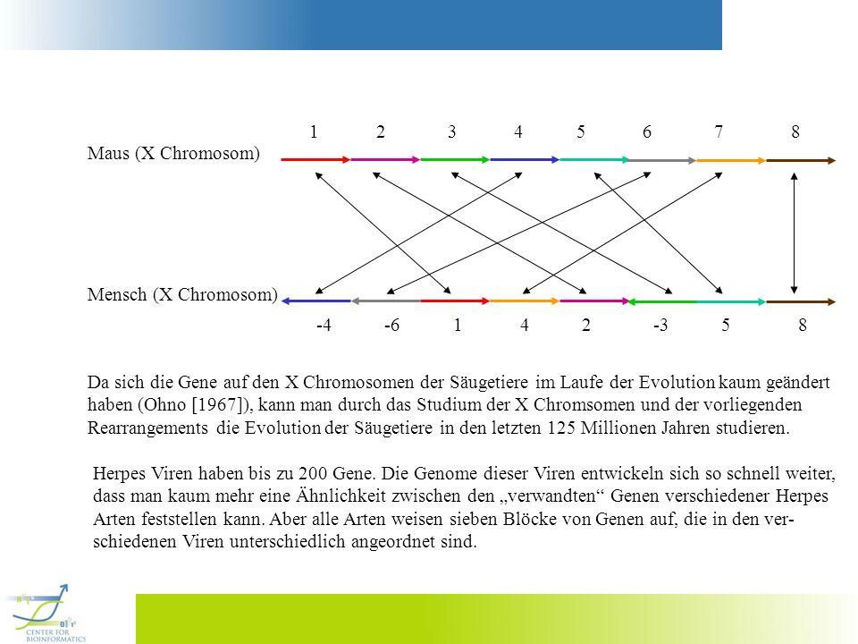 1 2 3 4 5 6 7 8 Maus (X Chromosom)