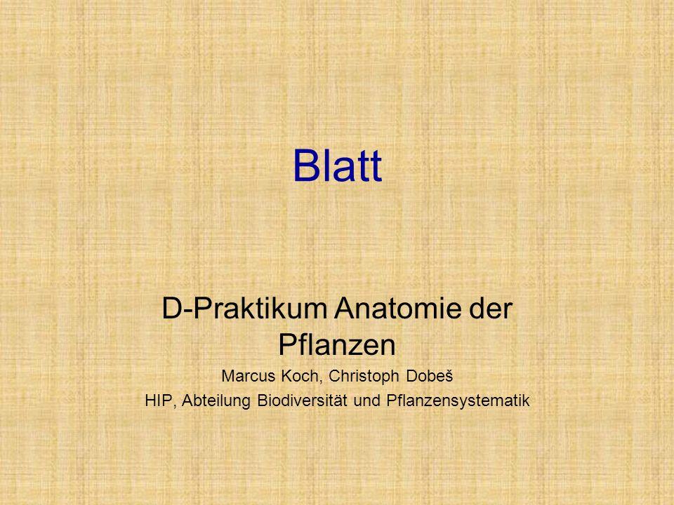 Blatt D-Praktikum Anatomie der Pflanzen Marcus Koch, Christoph Dobeš