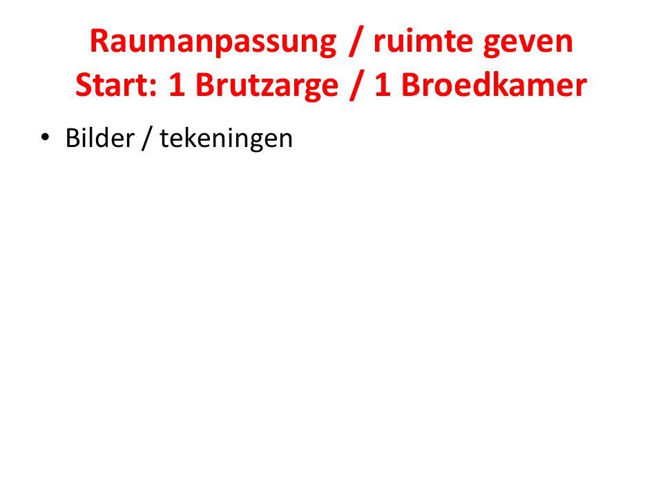 Raumanpassung / ruimte geven Start: 1 Brutzarge / 1 Broedkamer