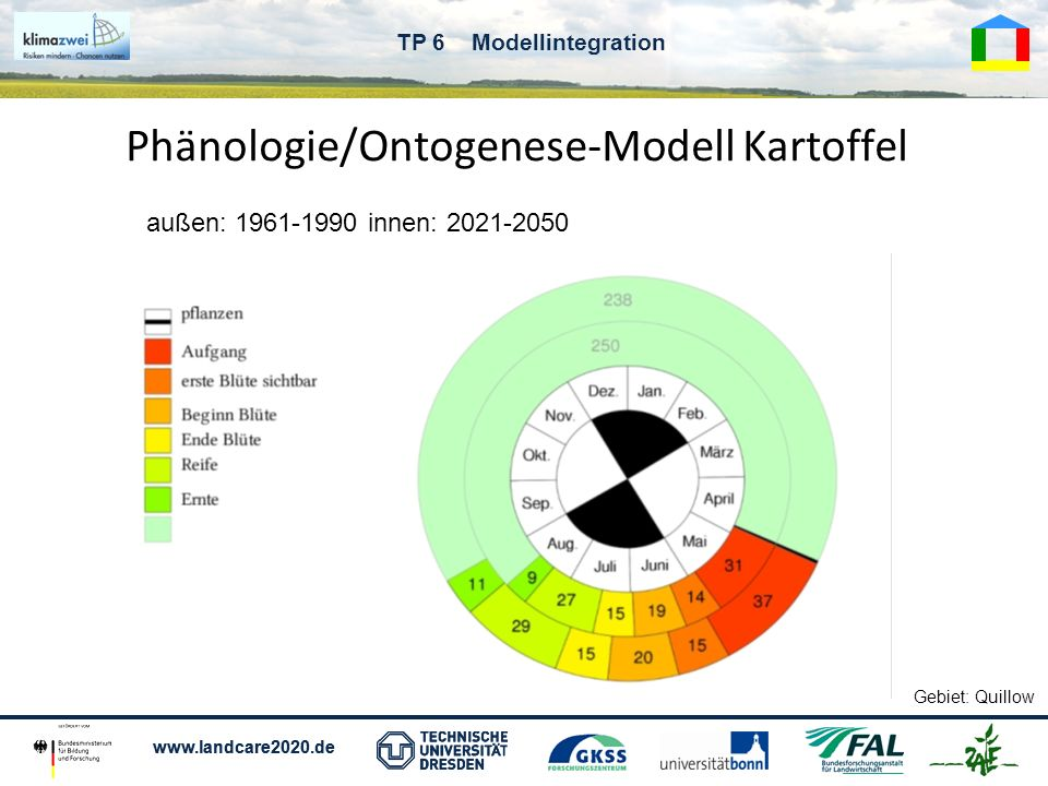 Phänologie/Ontogenese-Modell Kartoffel