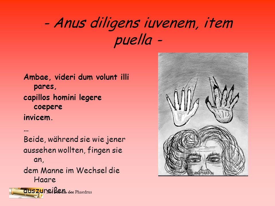 - Anus diligens iuvenem, item puella -