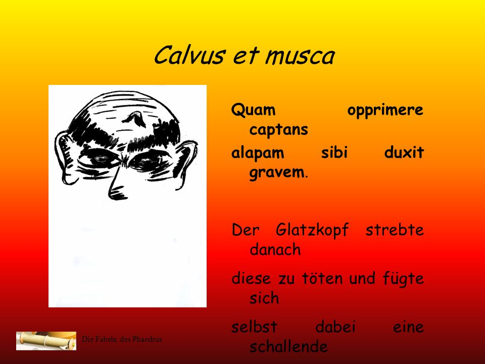 Calvus et musca Quam opprimere captans alapam sibi duxit gravem.