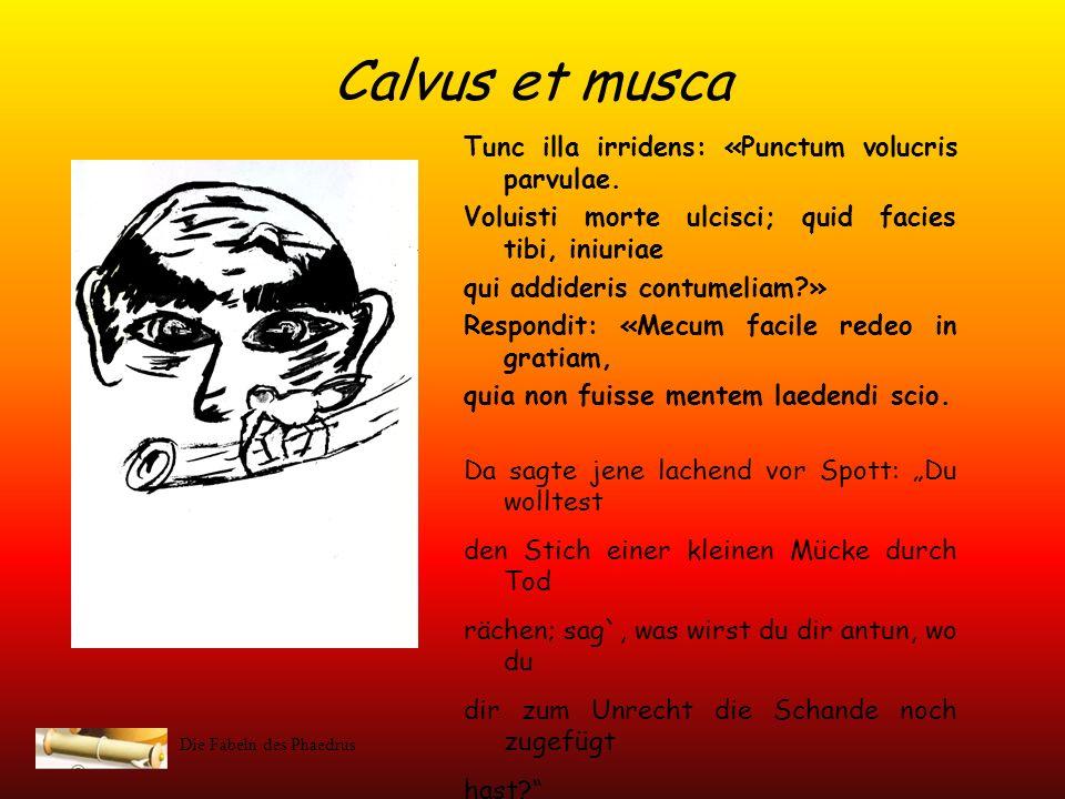 Calvus et musca Tunc illa irridens: «Punctum volucris parvulae.