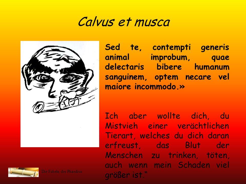 Calvus et musca Sed te, contempti generis animal improbum, quae delectaris bibere humanum sanguinem, optem necare vel maiore incommodo.»