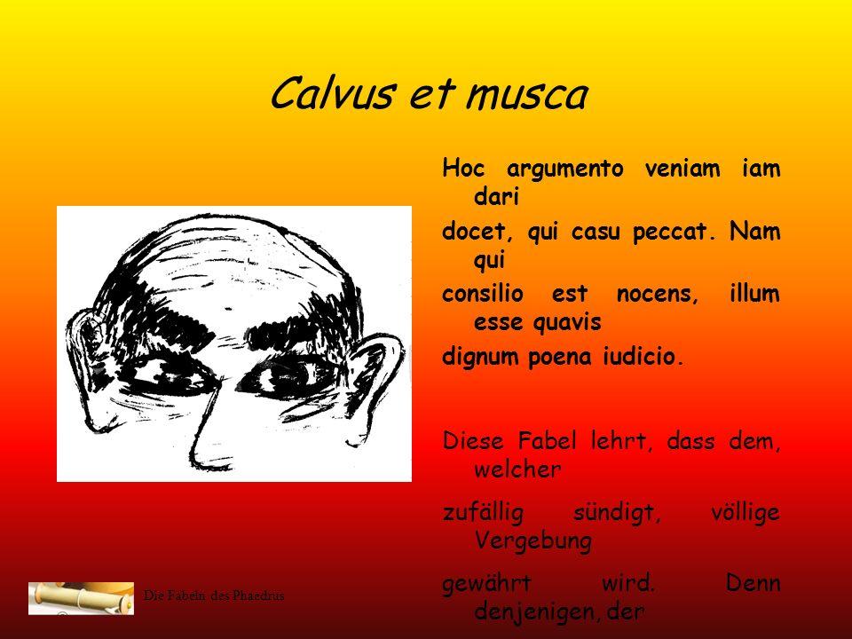 Calvus et musca Hoc argumento veniam iam dari
