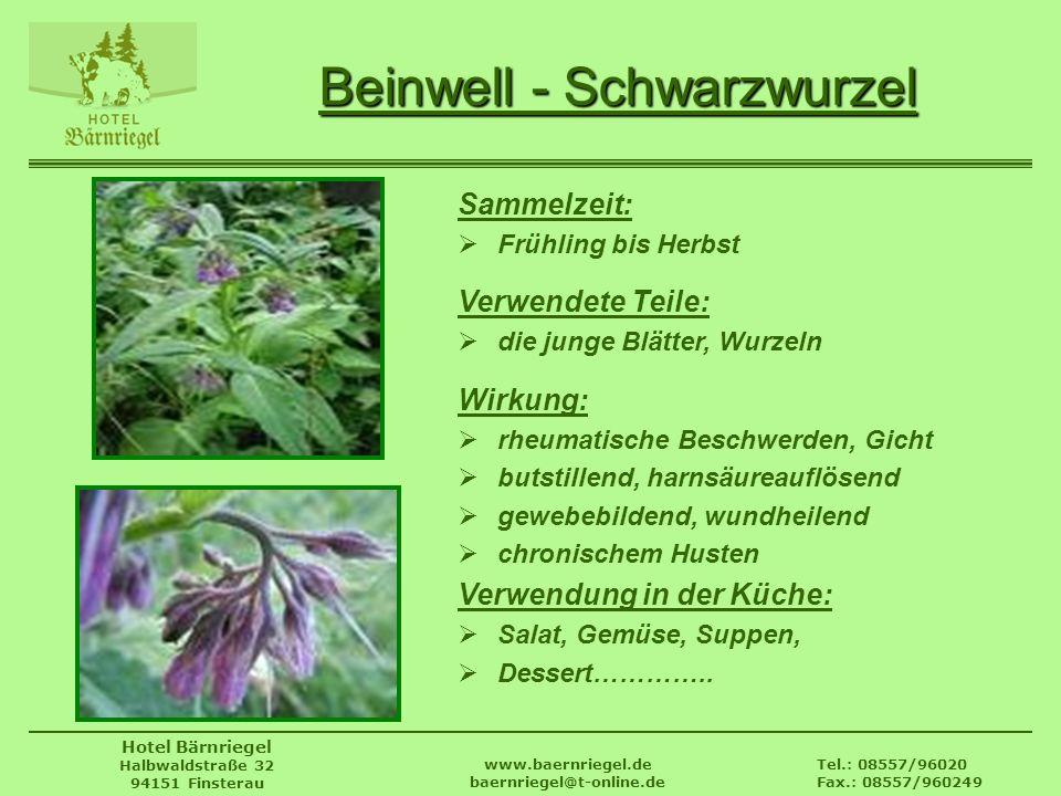 Beinwell - Schwarzwurzel