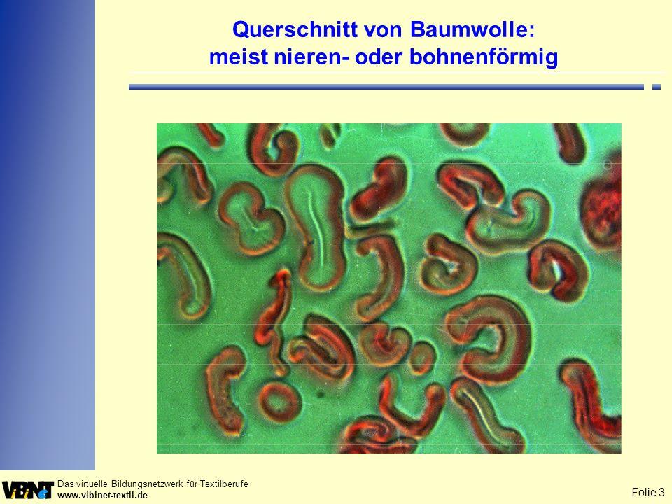 Querschnitt von Baumwolle: meist nieren- oder bohnenförmig
