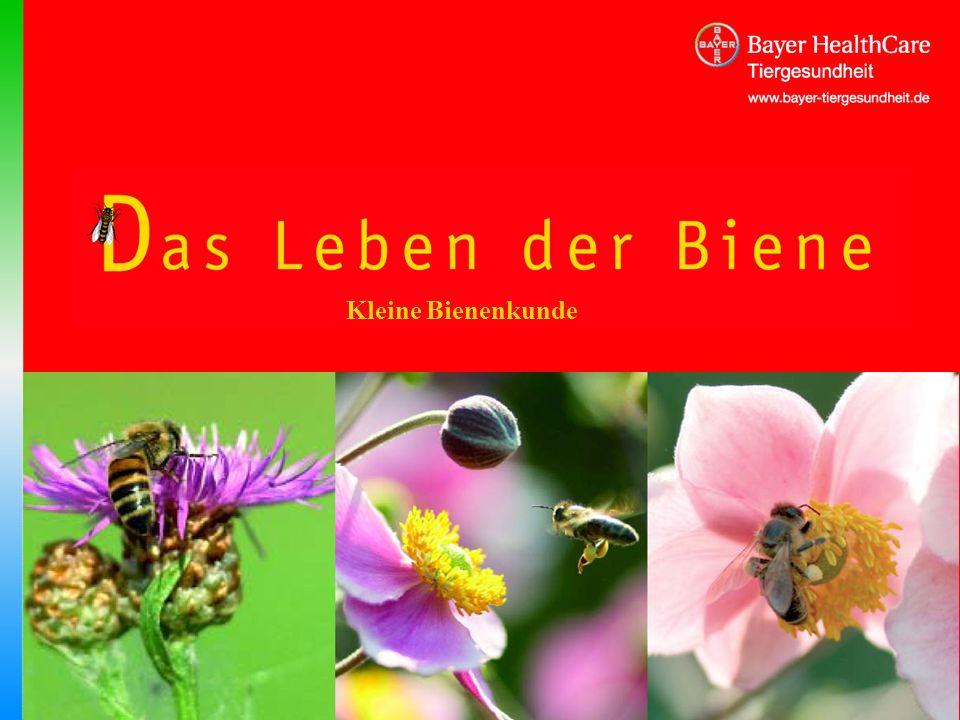 Titel Kleine Bienenkunde