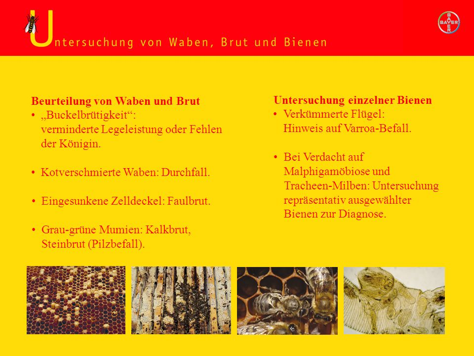 Untersuchung Waben, Brut und Bienen