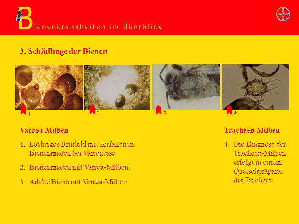 Schädlinge: Varrooamilben, Tracheenmilben