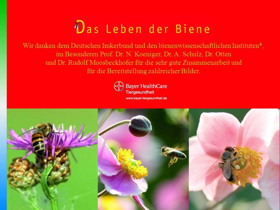 im Besonderen Prof. Dr. N. Koeniger, Dr. A. Schulz, Dr. Otten