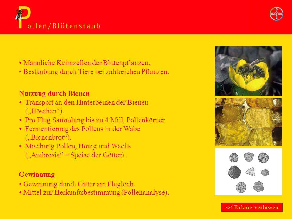 Exkurs Pollen/Blütenstaub