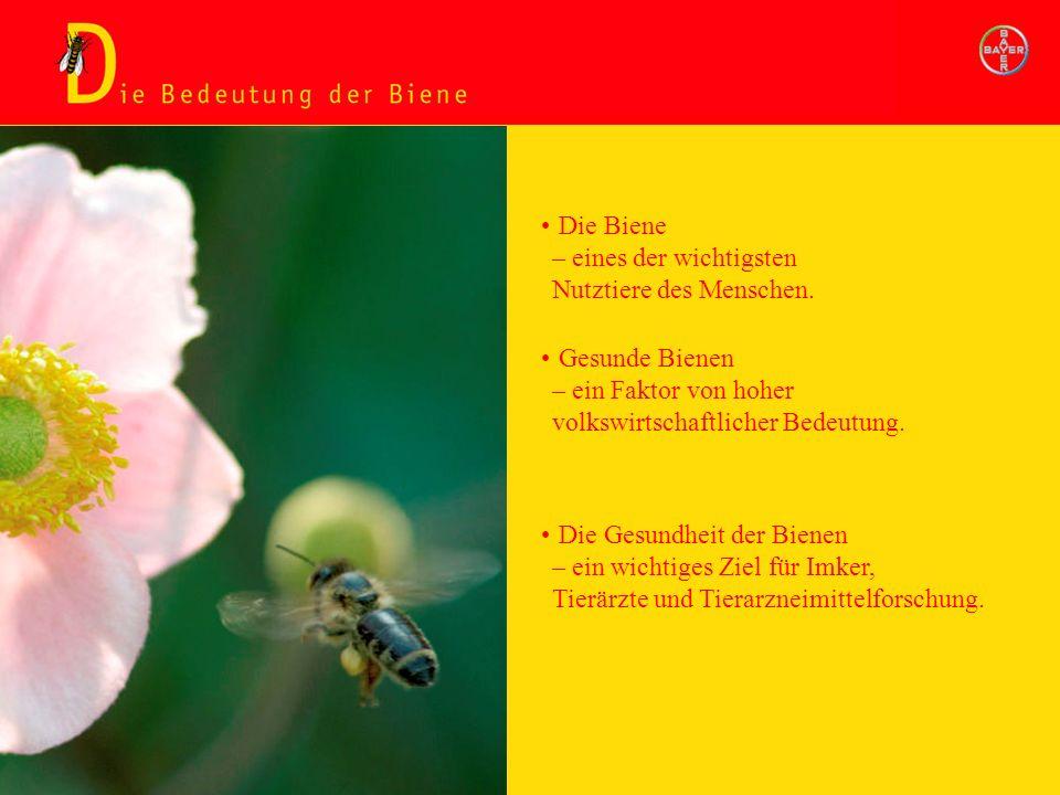 Die Bedeutung der Biene