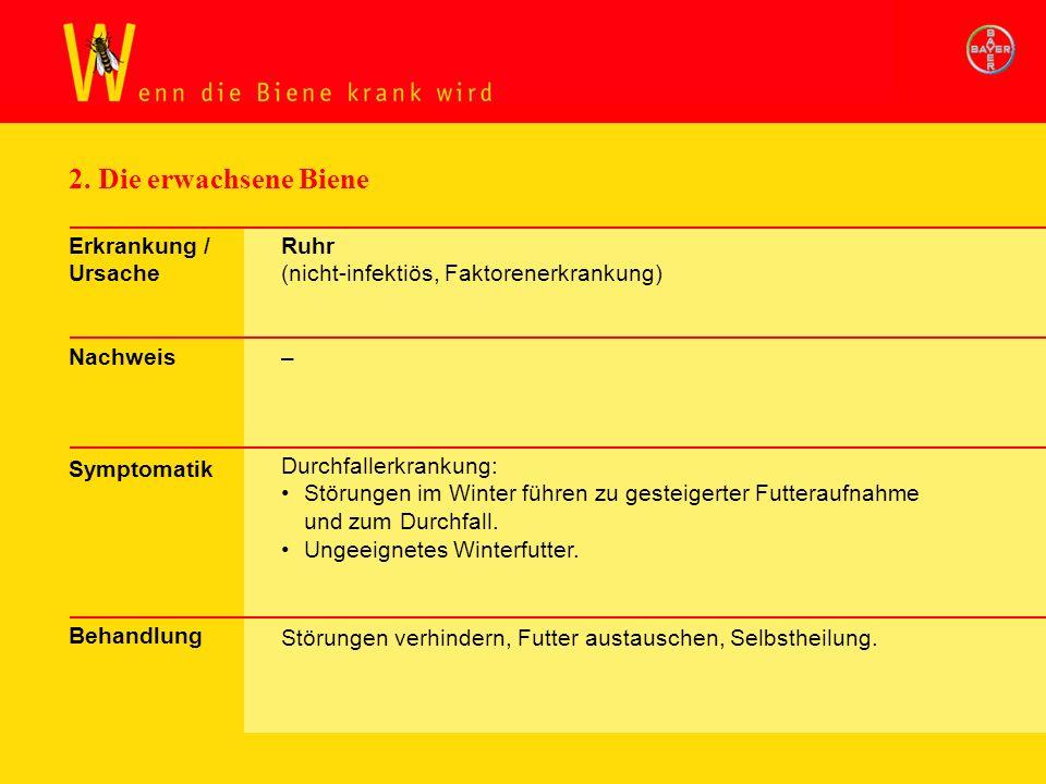 Exkurs Krankh. Biene: Ruhr
