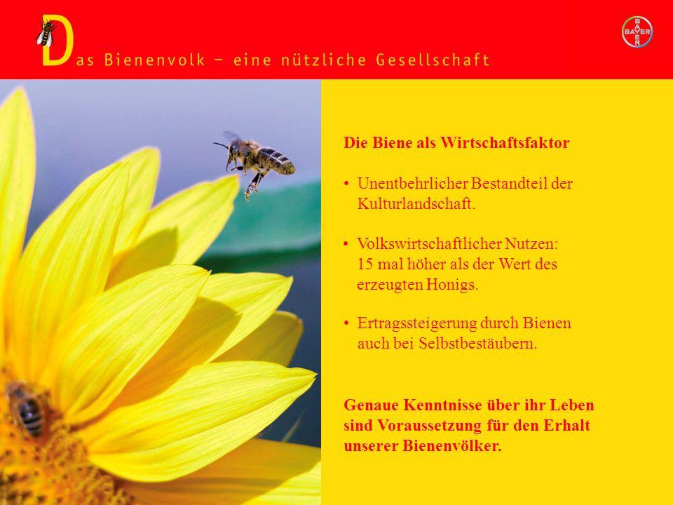 Bienenvolk - nützliche Gesellschaft