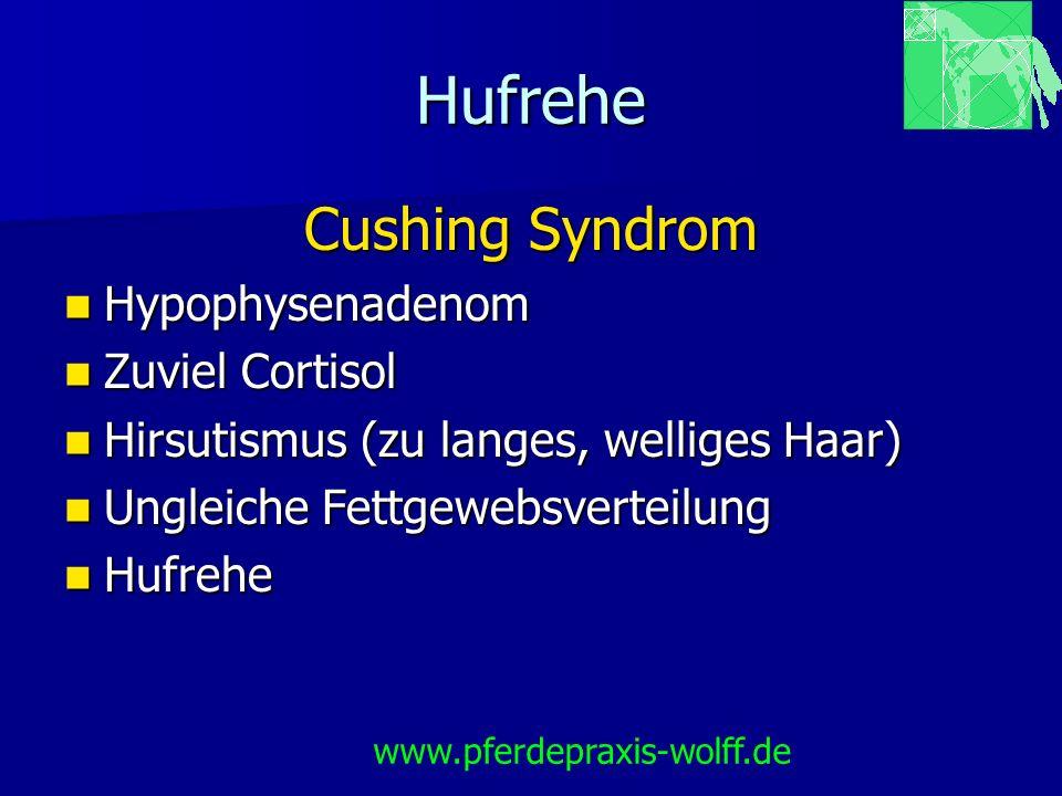 Hufrehe Cushing Syndrom Hypophysenadenom Zuviel Cortisol