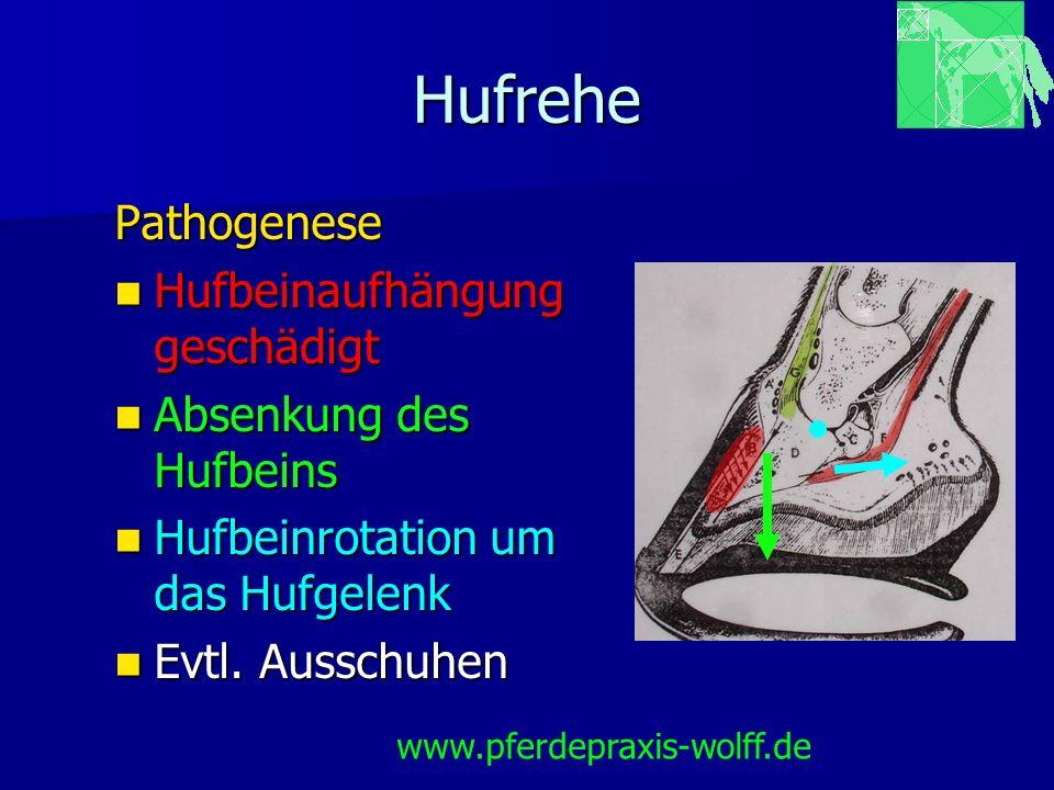 Hufrehe Pathogenese Hufbeinaufhängung geschädigt