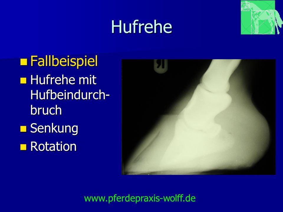 Hufrehe Fallbeispiel Hufrehe mit Hufbeindurch-bruch Senkung Rotation