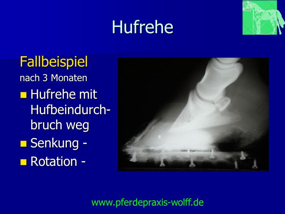 Hufrehe Fallbeispiel Hufrehe mit Hufbeindurch-bruch weg Senkung -