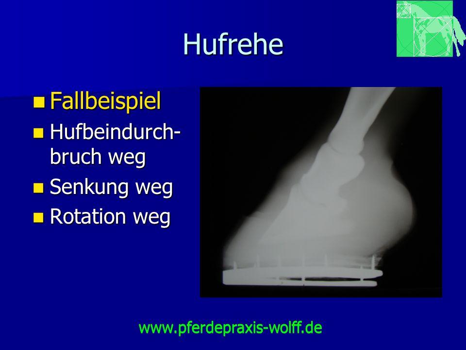 Hufrehe Fallbeispiel Hufbeindurch-bruch weg Senkung weg Rotation weg