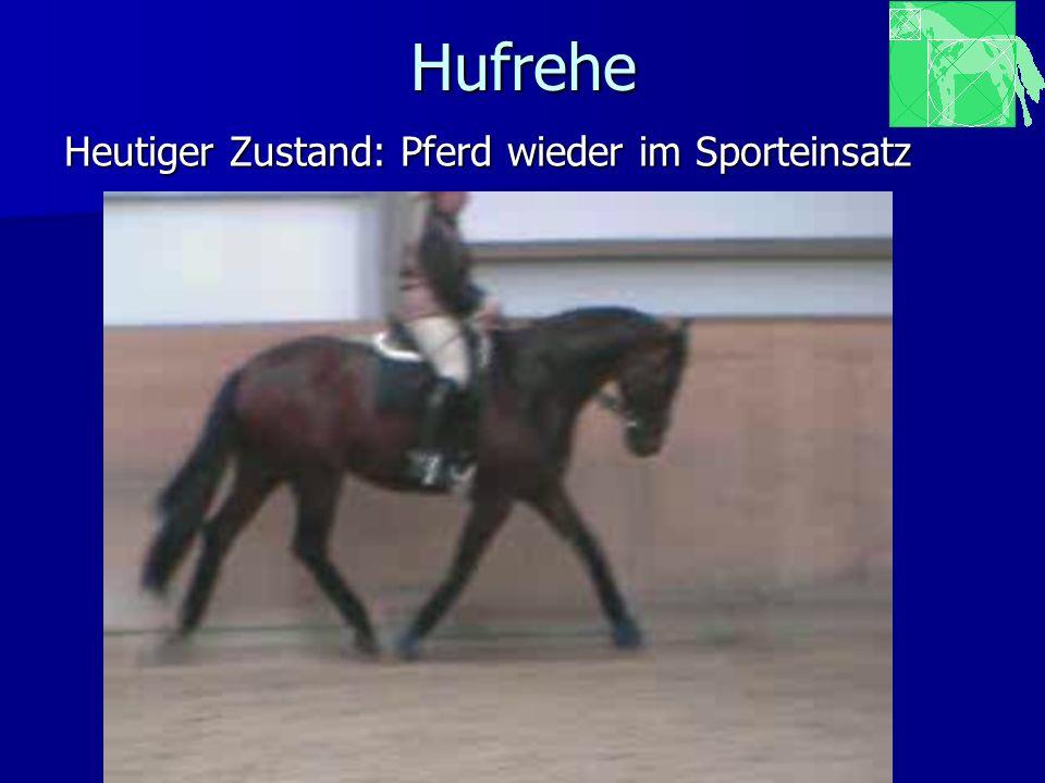 Hufrehe Heutiger Zustand: Pferd wieder im Sporteinsatz