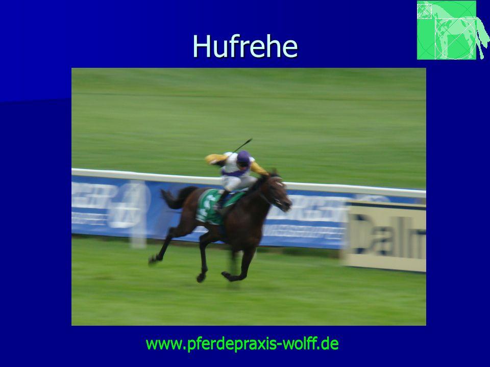 Hufrehe www.pferdepraxis-wolff.de www.pferdepraxis-wolff.de