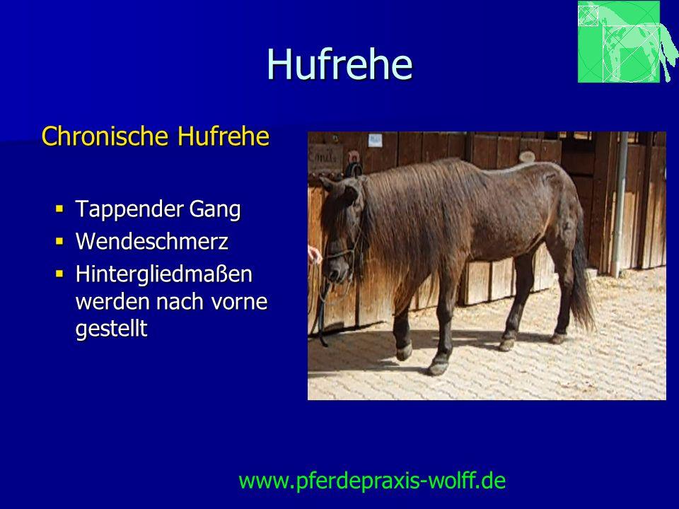 Hufrehe Chronische Hufrehe Tappender Gang Wendeschmerz