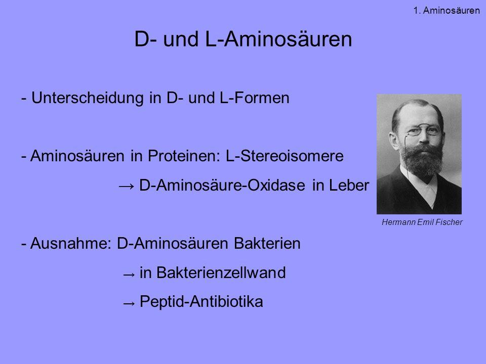 D- und L-Aminosäuren Unterscheidung in D- und L-Formen
