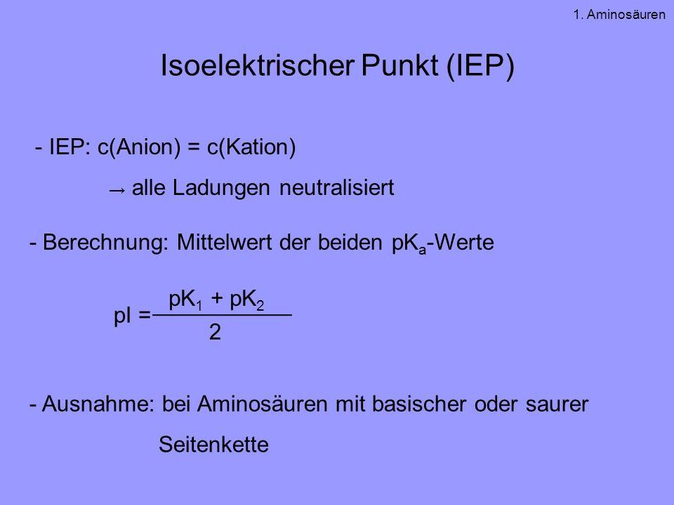 Isoelektrischer Punkt (IEP)