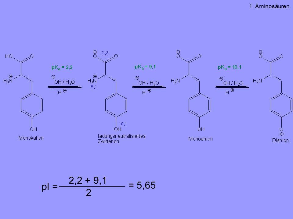 1. Aminosäuren ____________ 2,2 + 9,1 pI = = 5,65 2