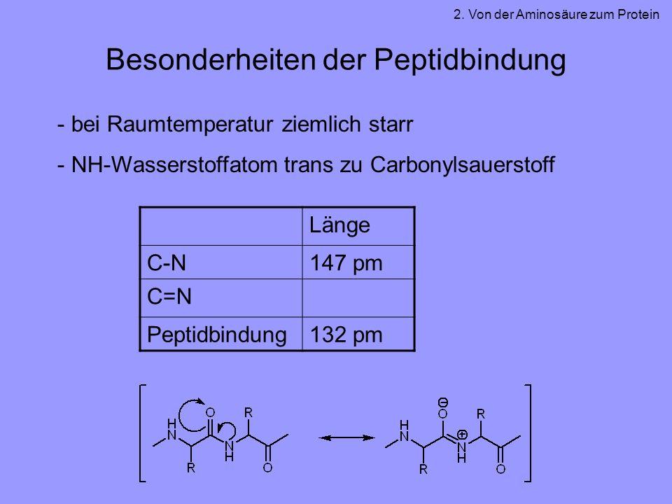 Besonderheiten der Peptidbindung