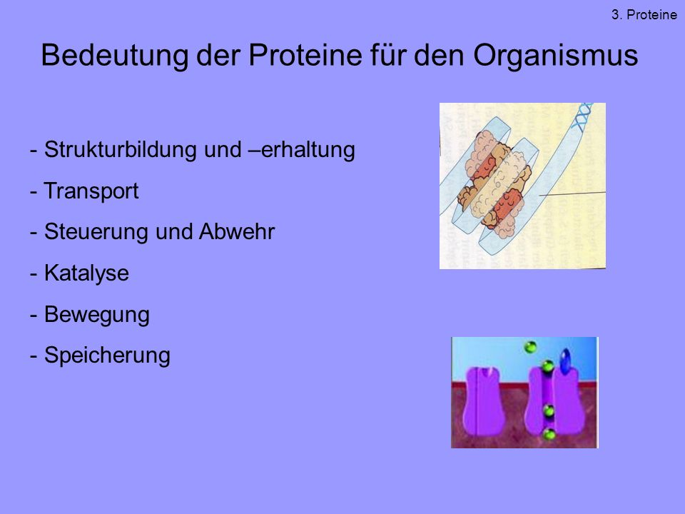 Bedeutung der Proteine für den Organismus