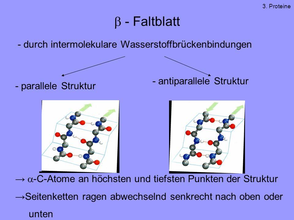 b - Faltblatt - durch intermolekulare Wasserstoffbrückenbindungen