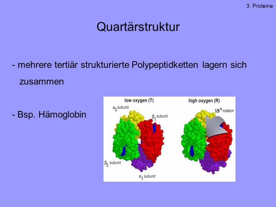 3. Proteine Quartärstruktur. mehrere tertiär strukturierte Polypeptidketten lagern sich. zusammen.