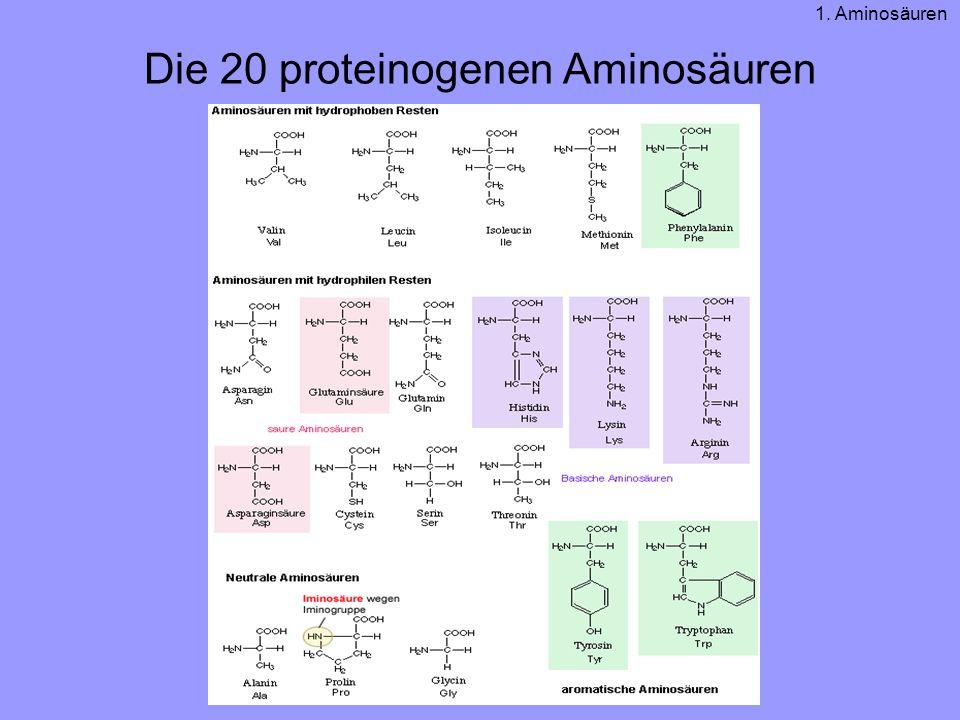 Die 20 proteinogenen Aminosäuren