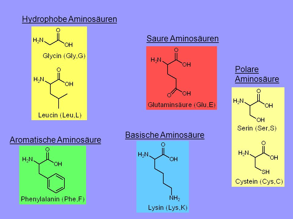 Hydrophobe Aminosäuren