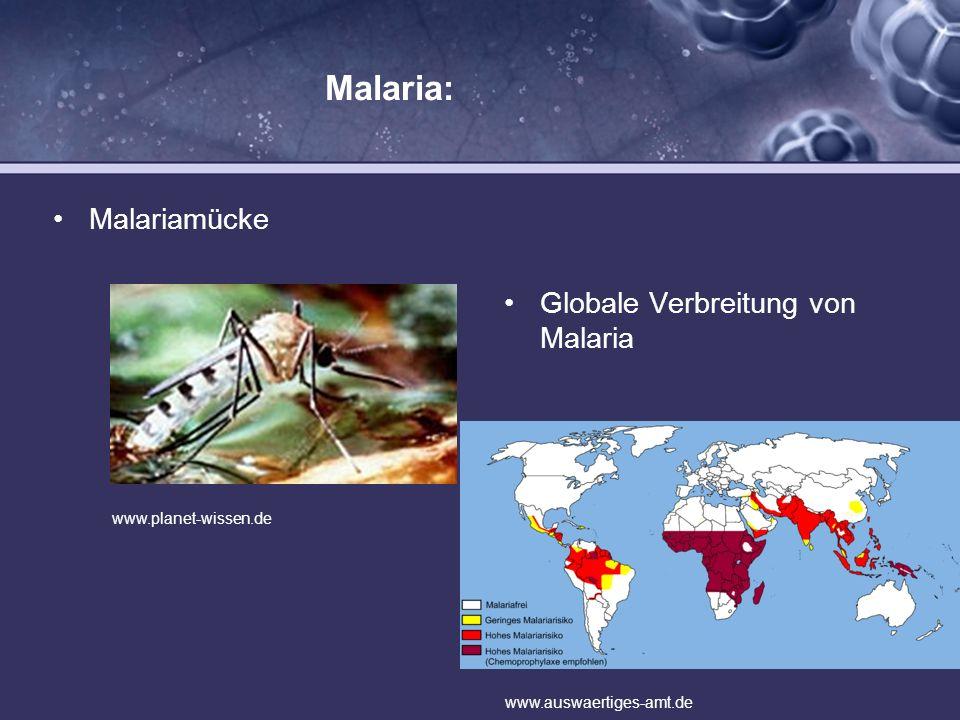 Malaria: Malariamücke Globale Verbreitung von Malaria