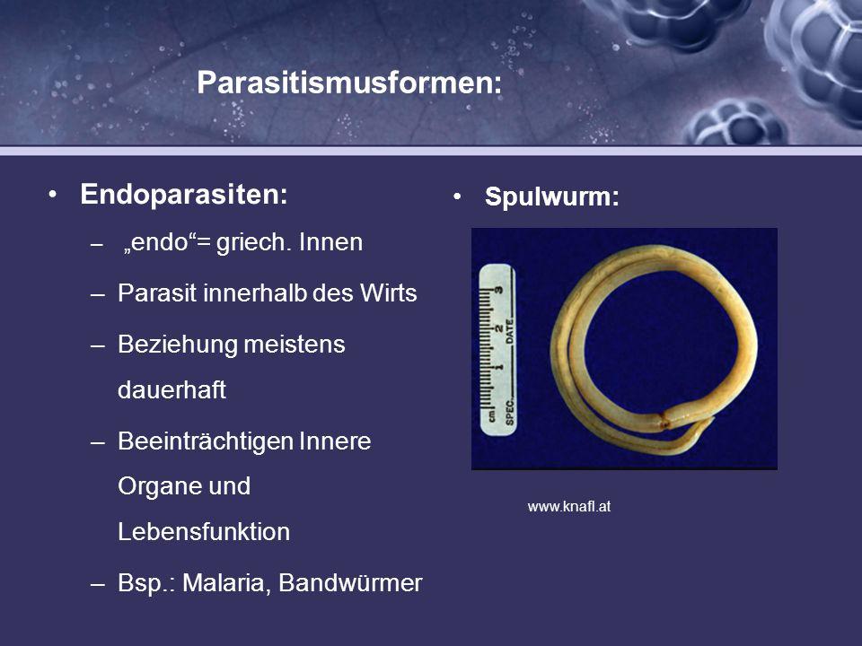 Parasitismusformen: Endoparasiten: Spulwurm: