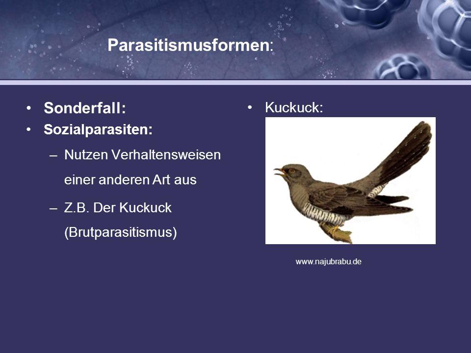 Parasitismusformen: Sonderfall: Kuckuck: Sozialparasiten: