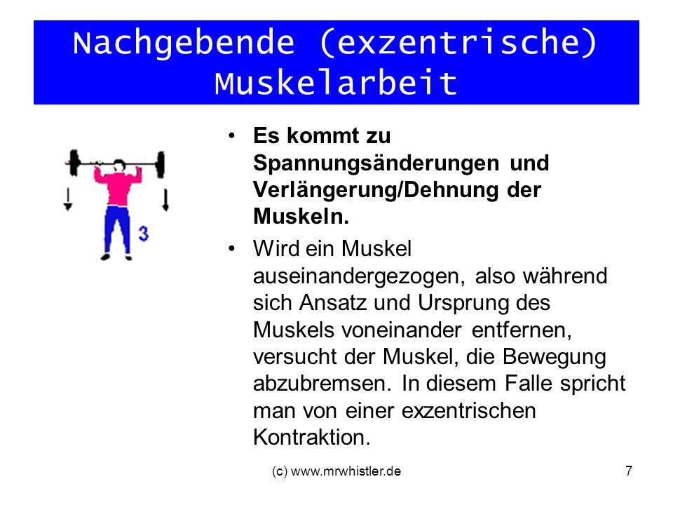 Nachgebende (exzentrische) Muskelarbeit