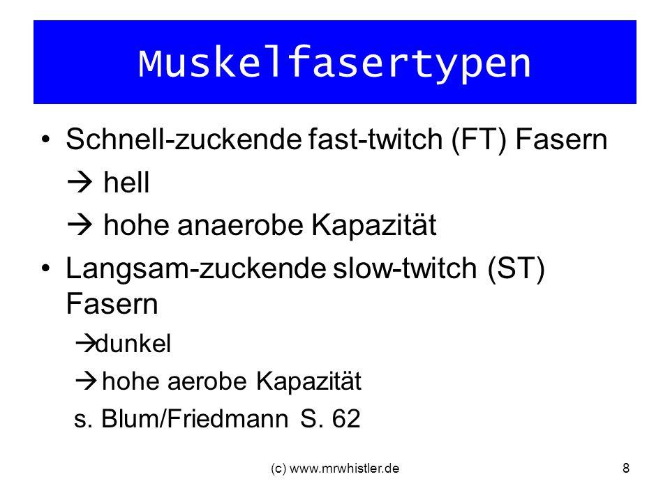 Muskelfasertypen Schnell-zuckende fast-twitch (FT) Fasern  hell