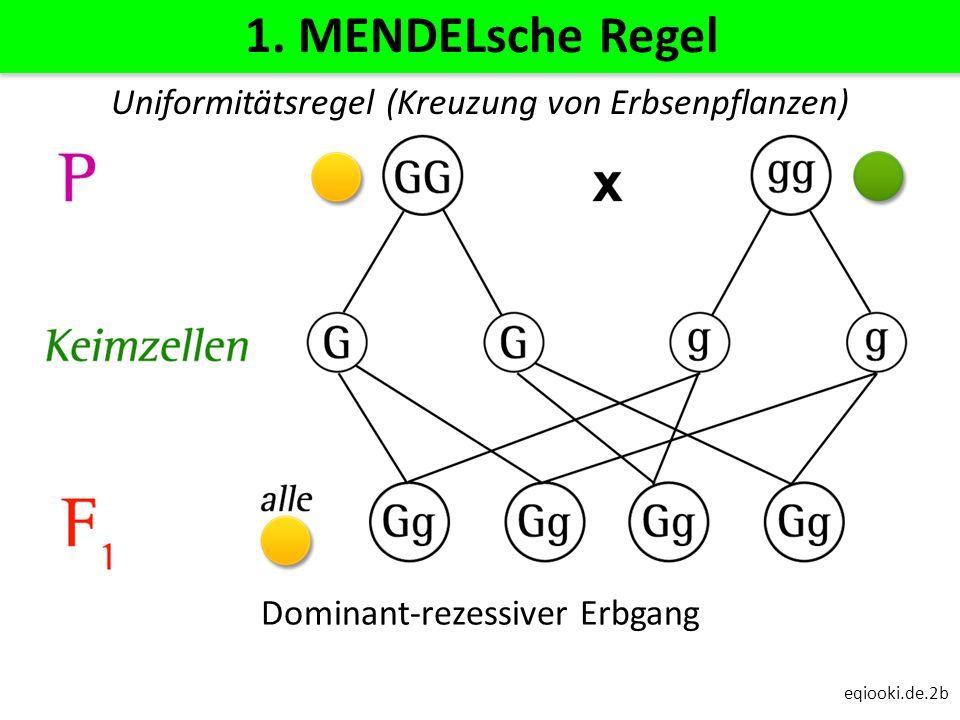 1. MENDELsche Regel Uniformitätsregel (Kreuzung von Erbsenpflanzen)
