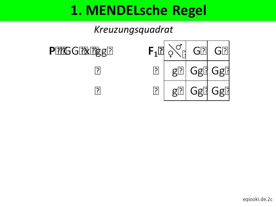 1. MENDELsche Regel Kreuzungsquadrat eqiooki.de.2c