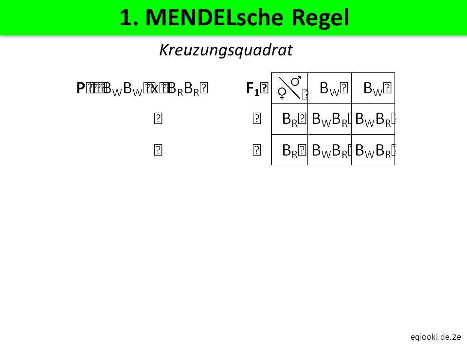1. MENDELsche Regel Kreuzungsquadrat eqiooki.de.2e