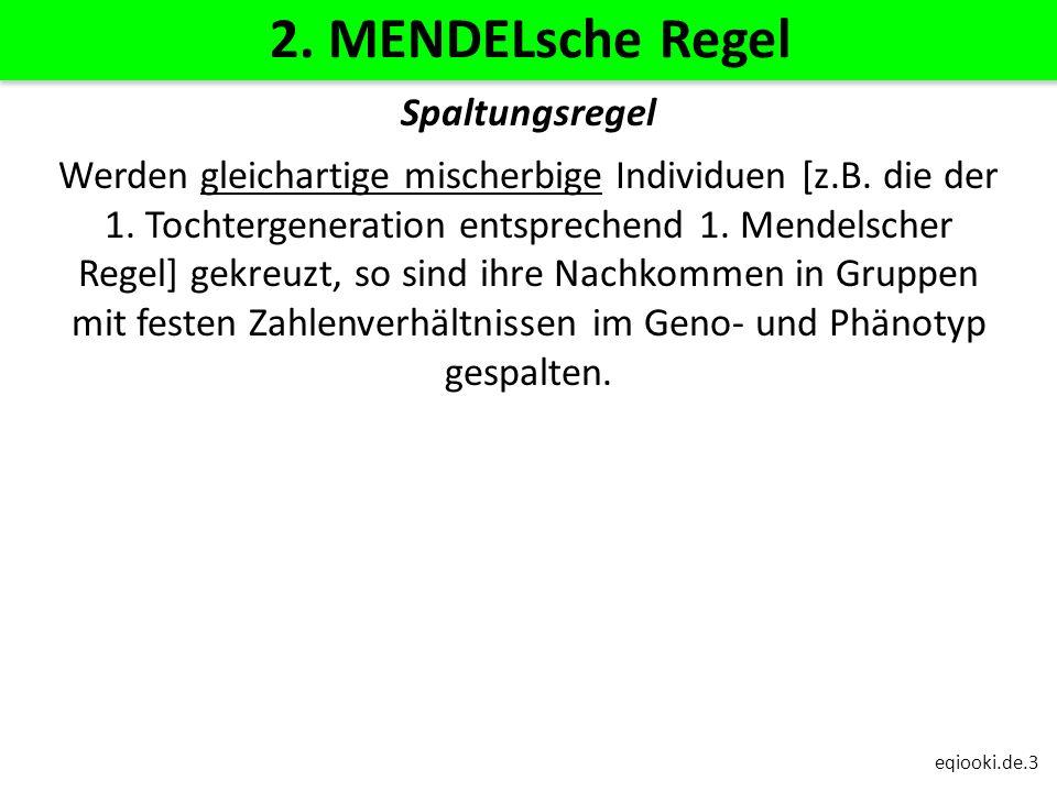 2. MENDELsche Regel Spaltungsregel