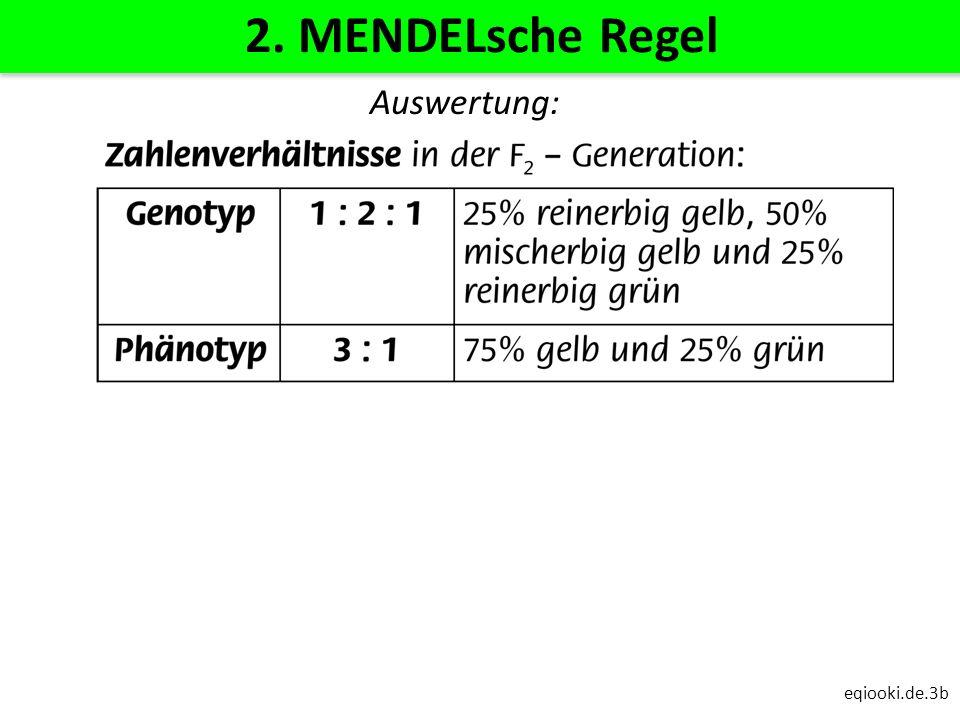 2. MENDELsche Regel Auswertung: eqiooki.de.3b
