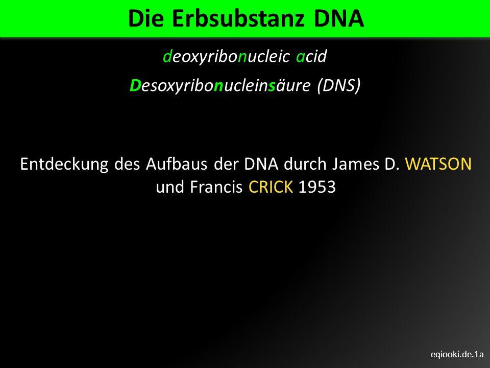Die Erbsubstanz DNA deoxyribonucleic acid Desoxyribonucleinsäure (DNS)