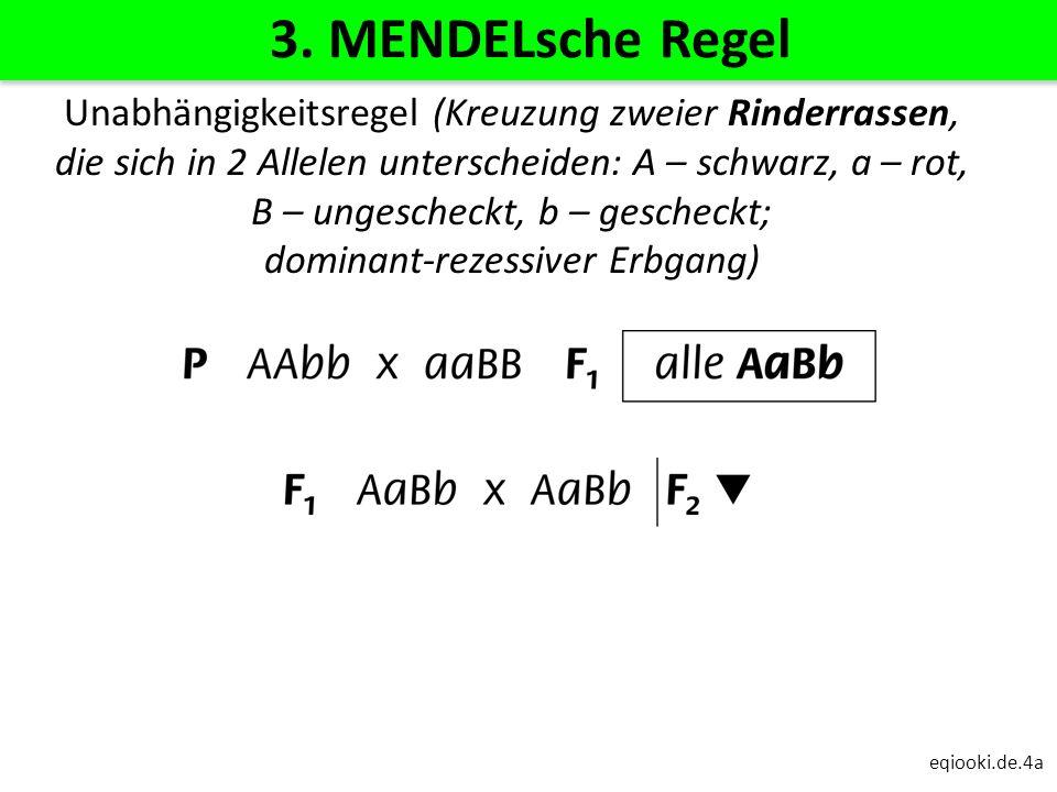 3. MENDELsche Regel